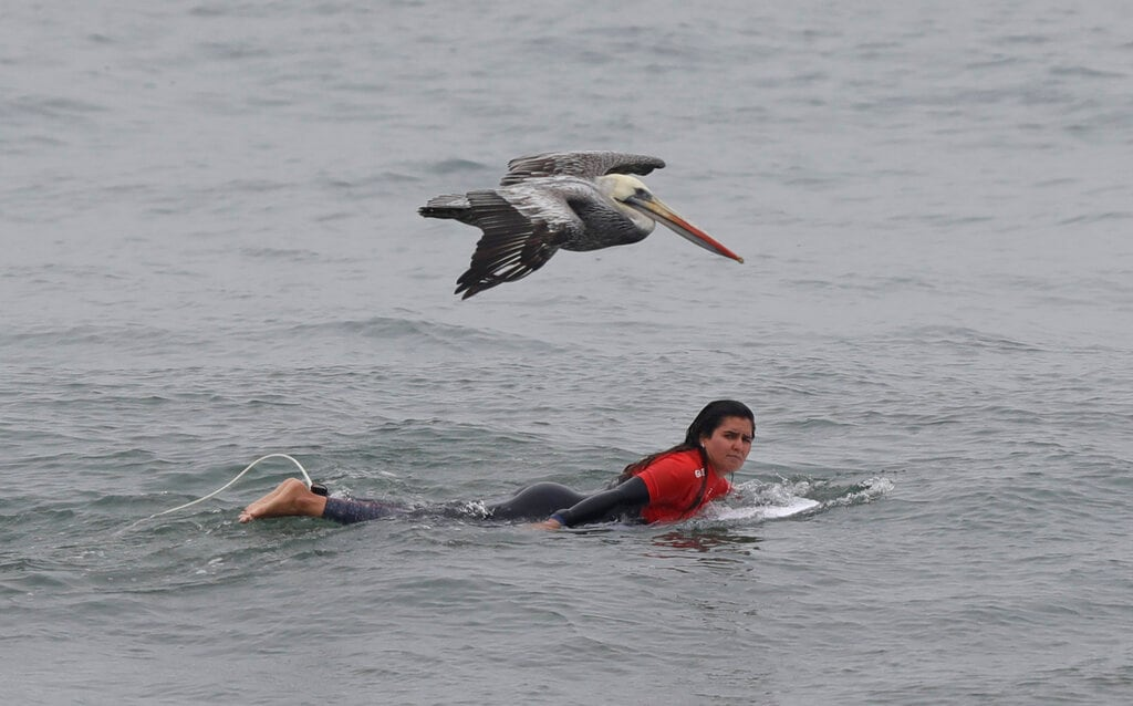 A surfer eyes a pelican flying overhead as she prepares to participate in the Pan American Games women's short board competition on Punta Rocas beach in Lima, Peru, Sunday, July 28, 2019. The sport is featured for the first time in the Games. (AP Photo/Silvia Izquierdo)