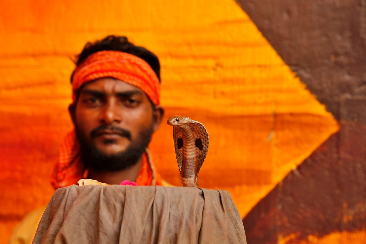 A man displays a snake to attract alms from devotees who arrive to worship at the temple during the annual Nag Panchami festival. (AP Photo/Rajesh Kumar Singh)