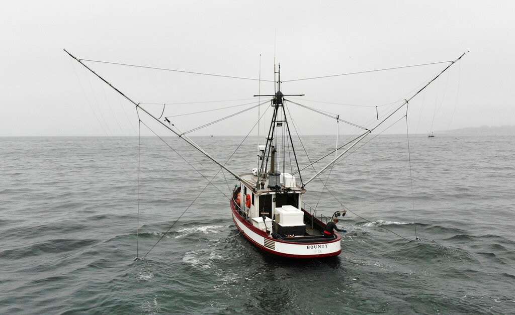 In this photo taken July 17, 2019, Sarah Bates fishes for chinook salmon on her boat Bounty off the coast of Bolinas, Calif. (AP Photo/Terry Chea)