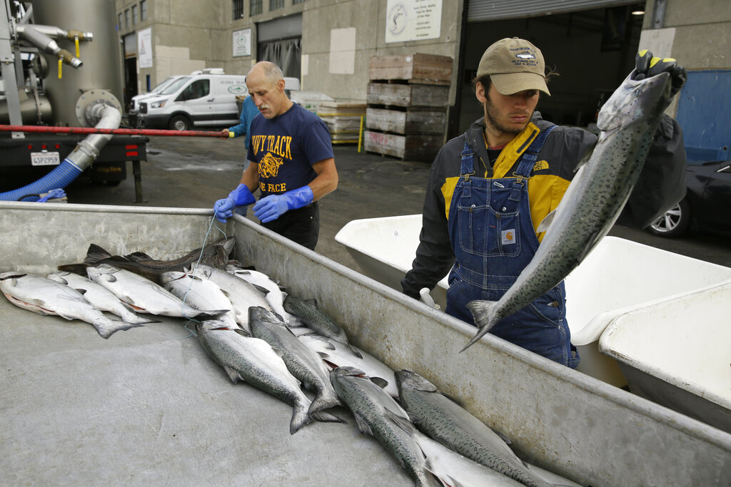 In this photo taken Monday, July 22, 2019, Cooper Campbell, right, with the California Department of Fish and Wildlife, looks for chinook salmon that are from their hatchery project at Fisherman's Wharf in San Francisco. (AP Photo/Eric Risberg)