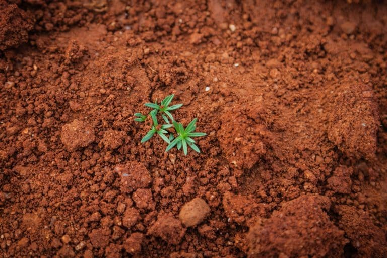 Restoring soil can help address climate change