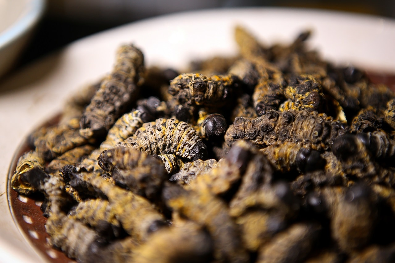 A bowl of Mopane worms stands on the counter for customers to try at the Insect Experience Restaurant in Cape Town, South Africa, August 23, 2019. Picture taken August 23, 2019. REUTERS/Sumaya Hisham