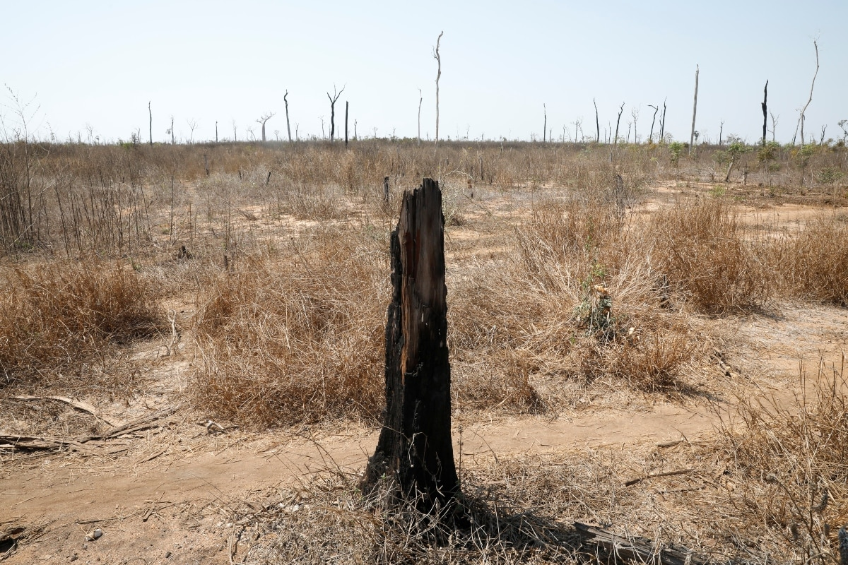 A burnt tree is all that is left from a forest in the Menabe Antimena protected area outside the village of Lambokely near city of Morondava, Madagascar, September 2, 2019. REUTERS/Baz Ratner/Files