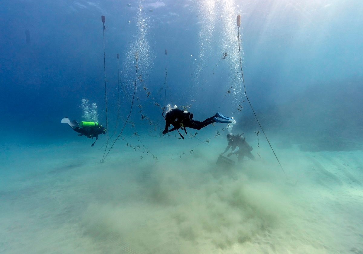 Divers, from left, Ray Taylor, Everton Simpson and Andrew Todd gather coral from a coral nursery to be planted inside the White River Fish Sanctuary. The tropical turquoise waters near the coast of Jamaica are beautiful and inviting, but they disguise the devastation that lurks beneath. But swim a little farther and pieces of regenerating staghorn coral appear, strung out on a line, waiting to be tied onto rocks in an effort to repair the damage done to reefs by man and nature. (AP Photo/David J. Phillip)
