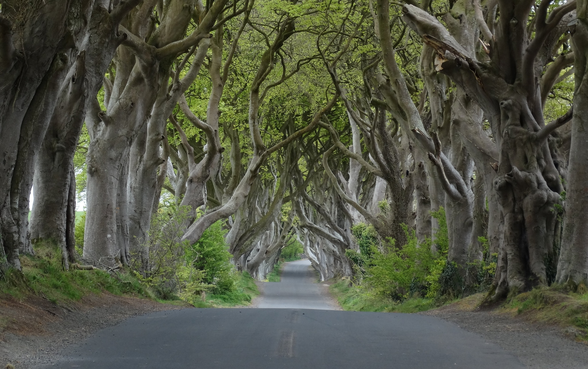 Dark Hedges — 'Game of Thrones'. The lush Kingsroad in 'Game of Thrones', the hugely popular hit fantasy drama that gripped viewers for eight years, was filmed here. The site is near Stanocum in County Antrim, Northern Ireland. (Photo: Wikimedia Commons)