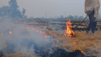 Delhi pollution: Punjab govt urges farmers to shun stubble burning