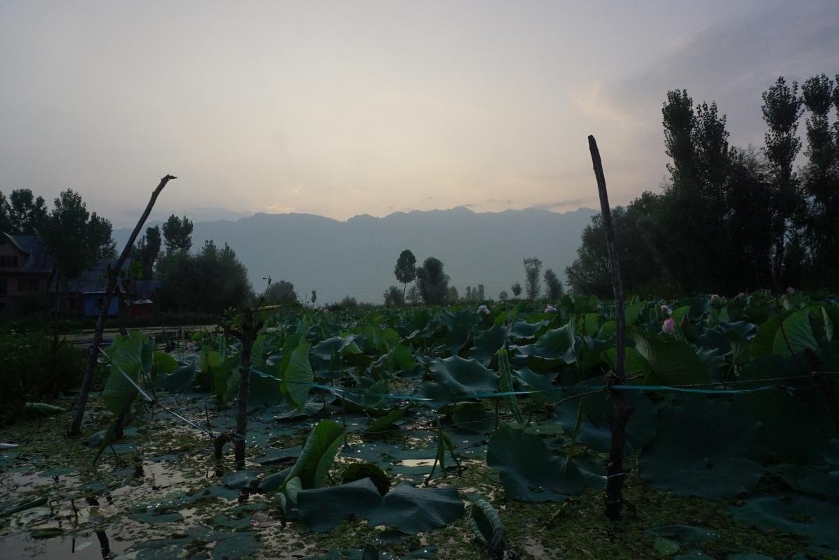Permanent houses in Dal Lake, Srinagar.