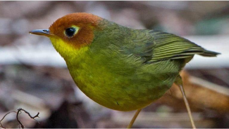 Did you call? Misuse of bird call audio is disturbing bird behaviour