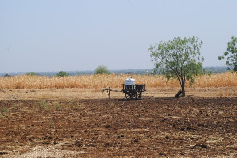 With recurrent droughts, dry fields like this have become a common sight in the Marathwada region. Photo by Meena Menon.
