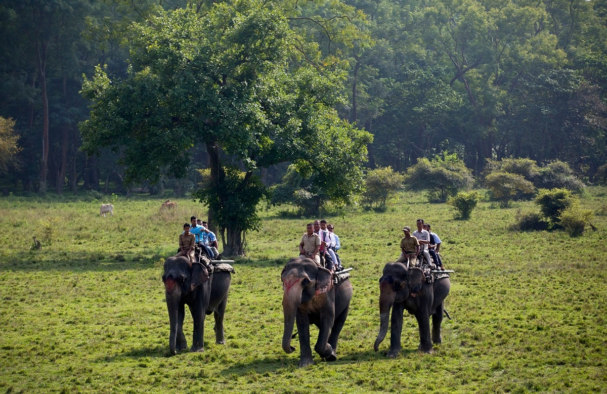 Tourists ride on elephants during the re-opening of Pobitora wildlife sanctuary that was closed to tourists due to the monsoon season in Pobitora, on the outskirts of Gauhati. The wildlife sanctuary in the northeastern Assam is known for its Indian one-horned rhino population. (AP Photo/Anupam Nath)
