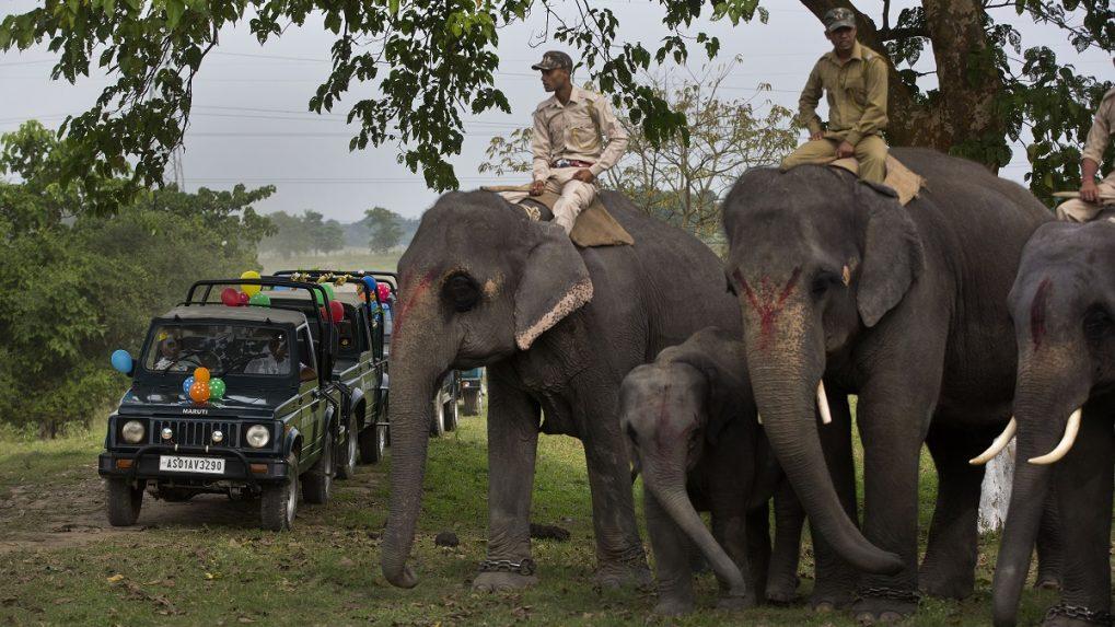 Assam elephant in custody of Tamil Nadu to be sent back home