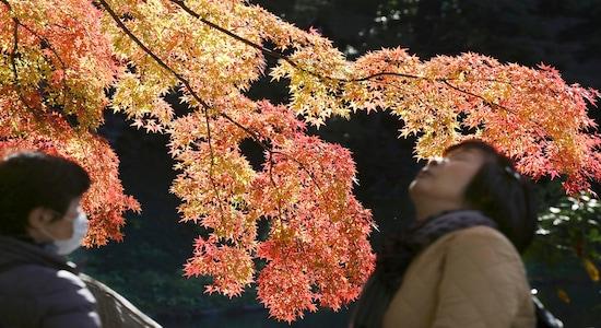 In this Tuesday, Dec. 3, 2019, file photo, people visit the Koishikawa Korakuen Gardens in Tokyo to enjoy the autumn colors. (AP Photo/Koji Sasahara, File)