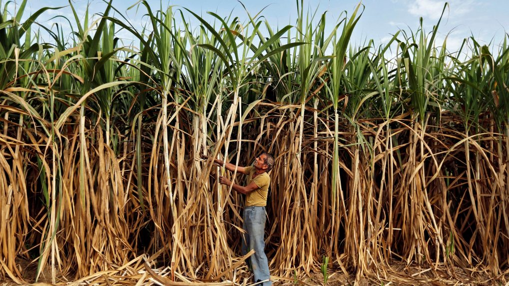 Excessive water use for sugarcane crop creating crisis: Expert