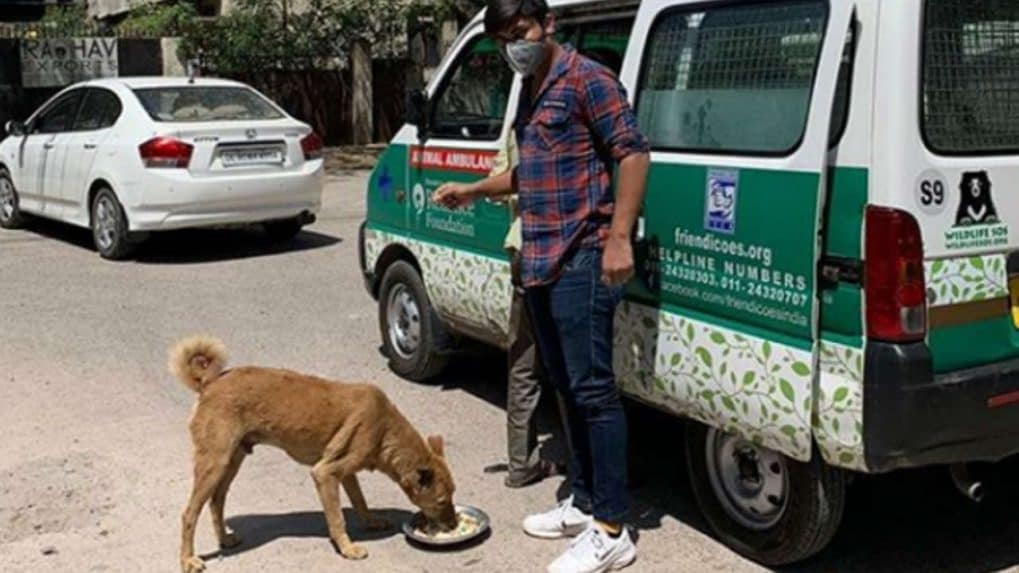 Coronavirus lockdown: As stray animals go without food and water, you could help make a difference