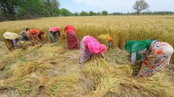 Govt hikes MSP of Rabi crops for marketing season 2021-22