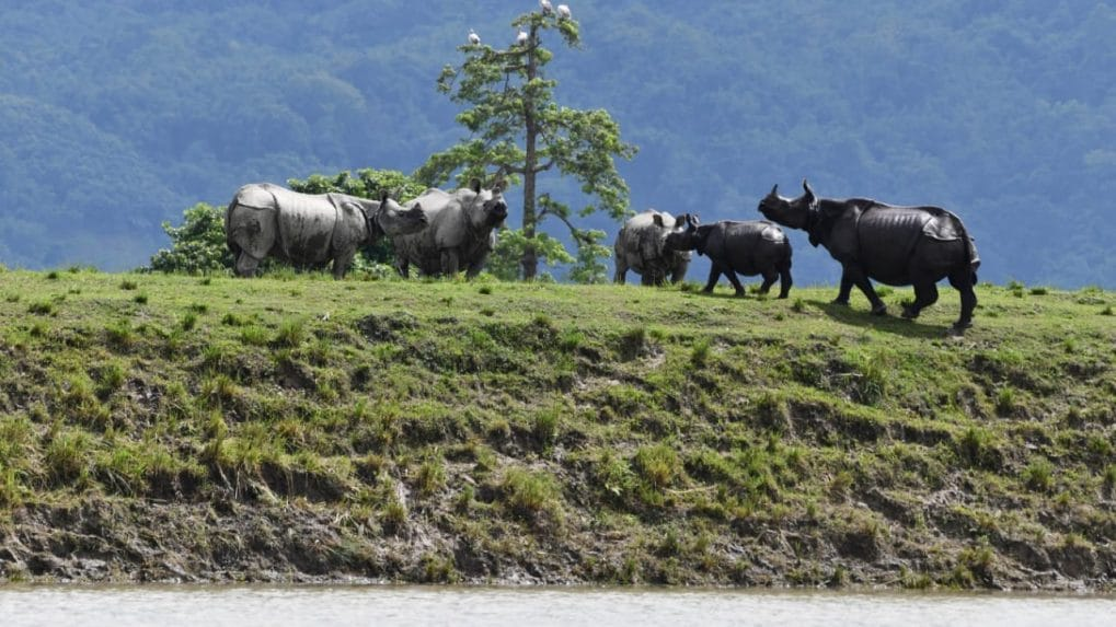 Assam flood in pictures: Third wave submerges 92% of Kaziranga National Park