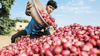 Nafed floats bids for supply of 15,000 tonne of imported red onions by November 20