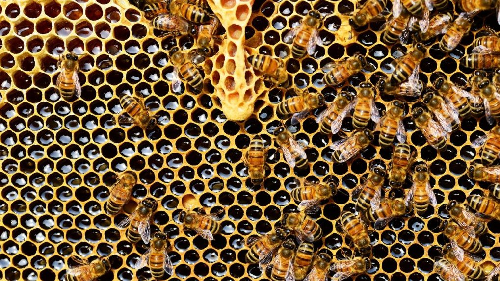 Honey adulteration: FSSAI to review samples' issue; seeks more details from CSE
