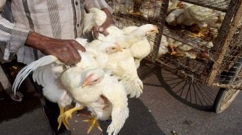 Bird flu in India: 219 more birds found dead in Rajasthan