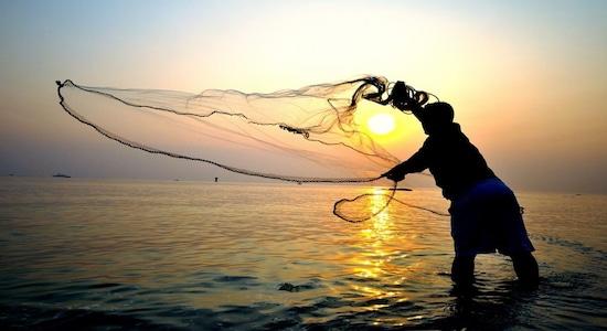Trendspotting: Frozen shrimp driving India's marine exports